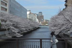 Aizu-Sakura